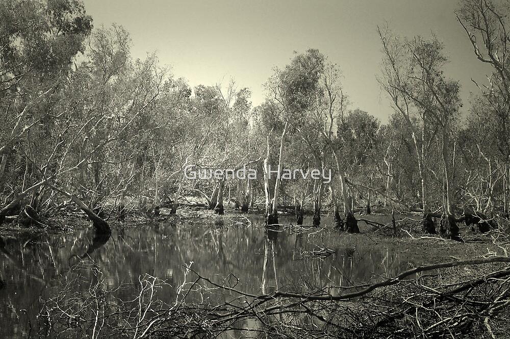 Australia,NT.5956 by Gwenda  Harvey