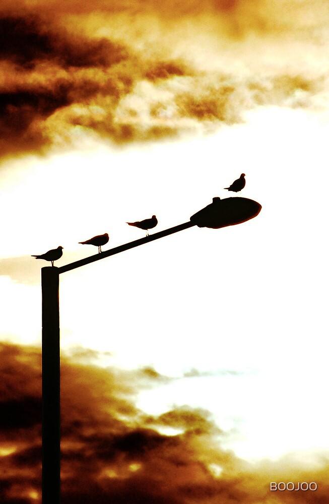 birds by BOOJOO