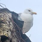 Gull sitting on our burnt out Cinema...   Dorset UK by lynn carter