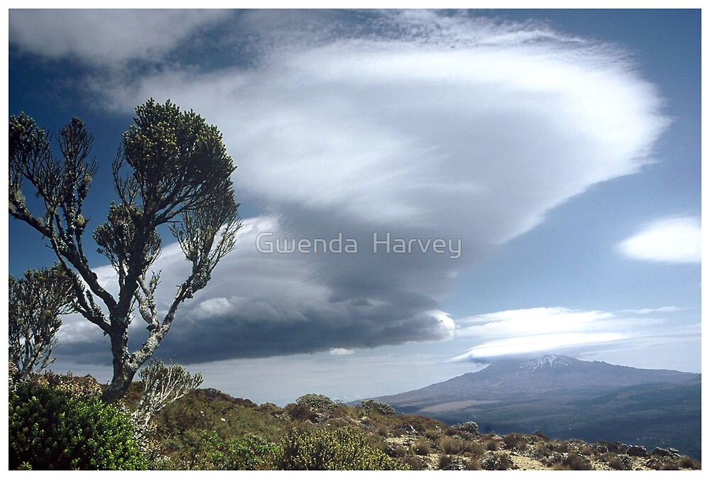 Kaimanawa View by Gwenda  Harvey