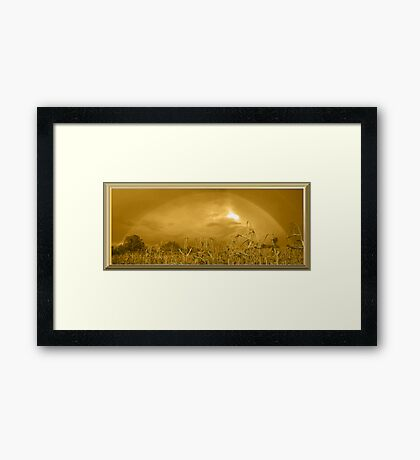 Somewhere In a Cornfield It`s Amber Framed Print