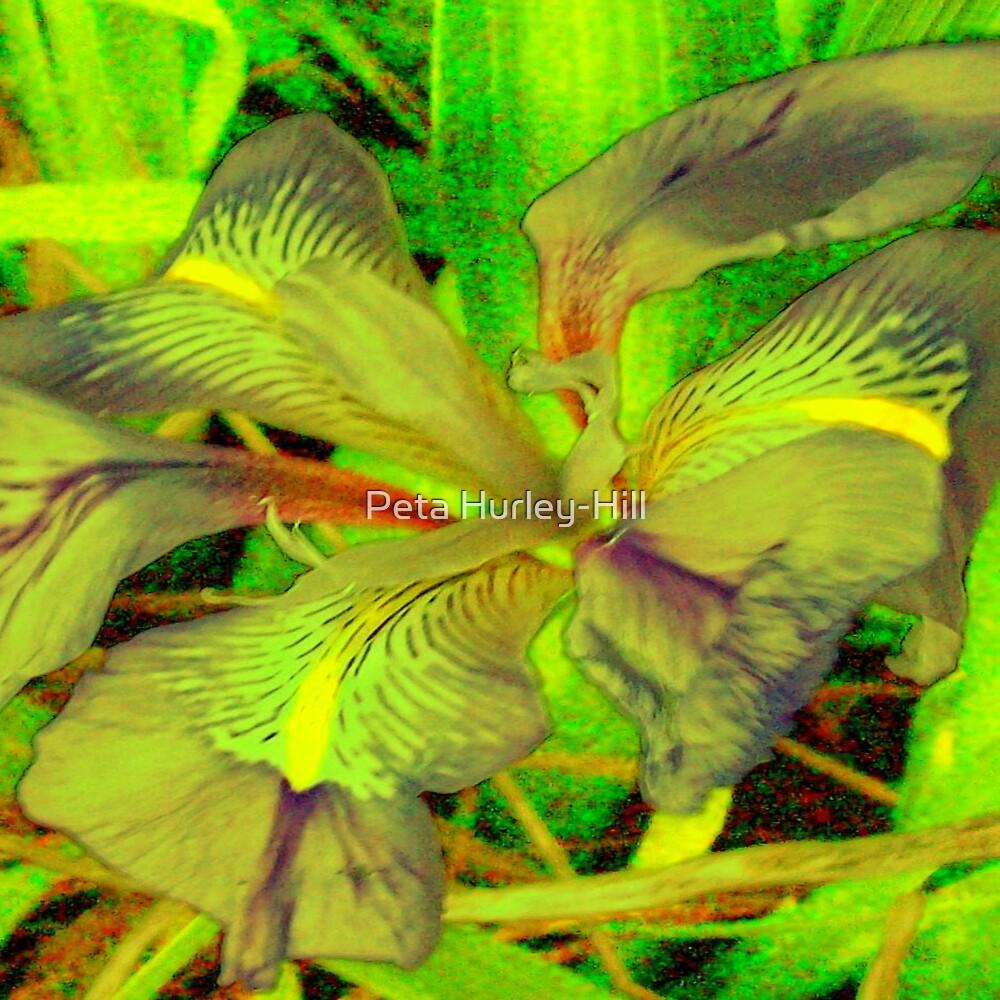 iris by Peta Hurley-Hill