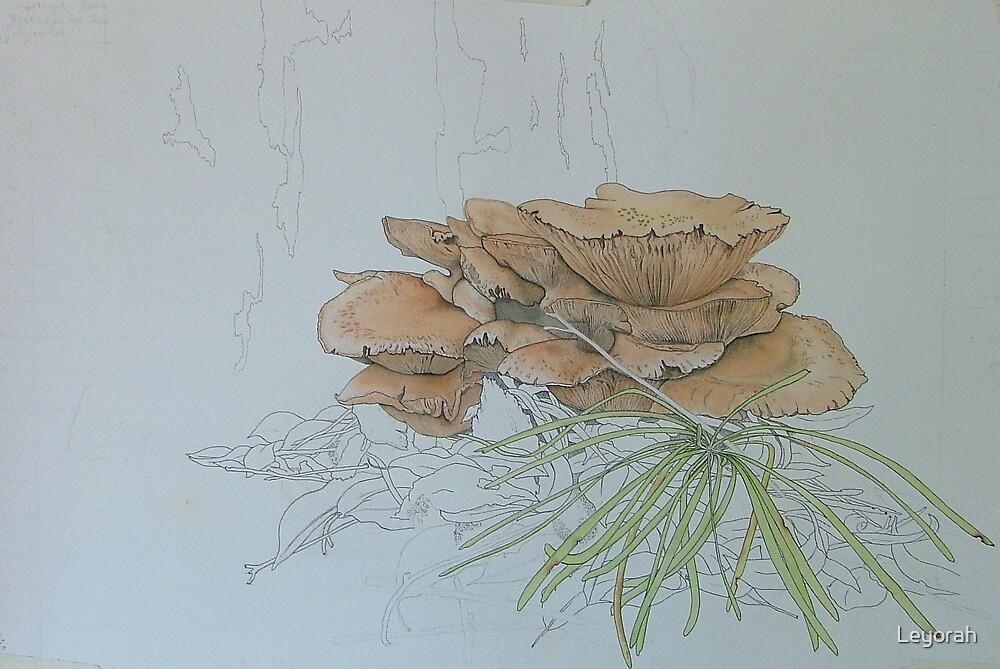 Study of Fungi by Leyorah
