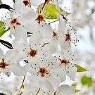 White Whispers by Scott Mitchell