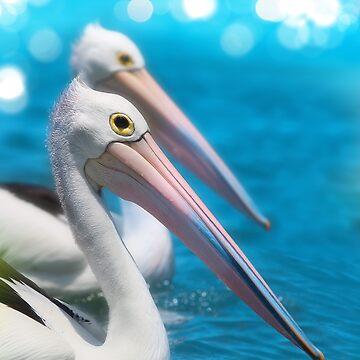 Australian Pelicans by Reef