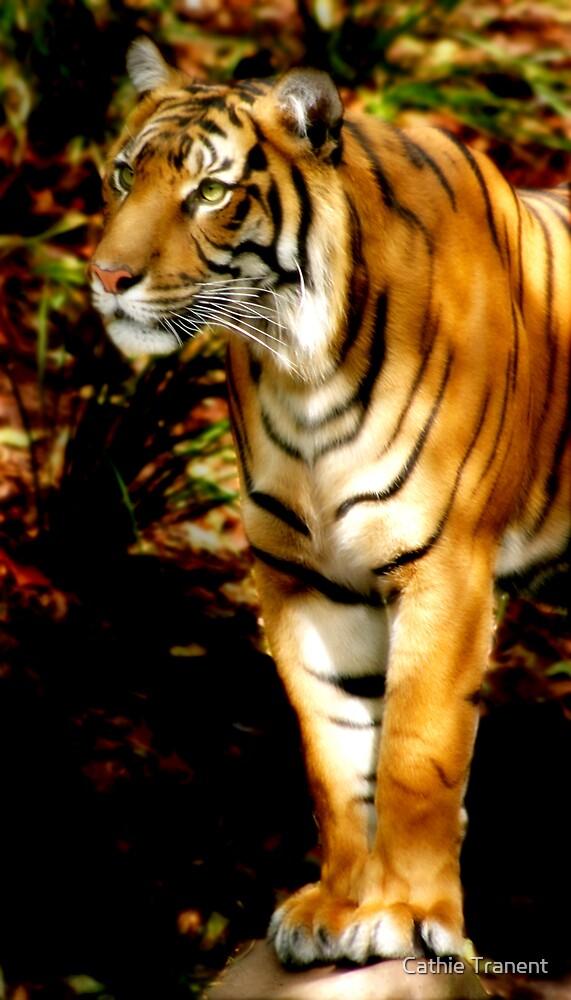 Predator by Cathie Tranent
