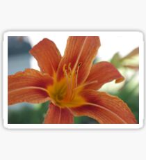 flowers in the orange sun Sticker