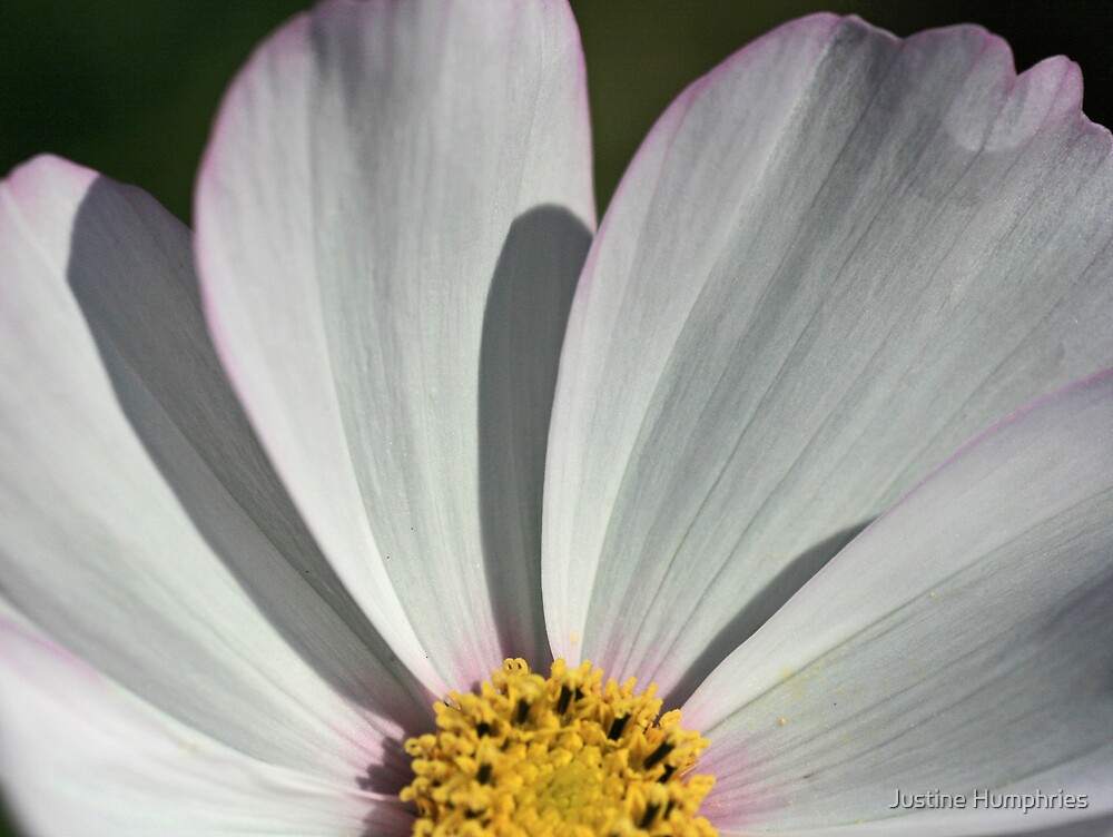 Cosmos & Shadows by Justine Humphries