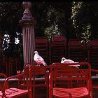 Doves of Seville by Arlene Zapata