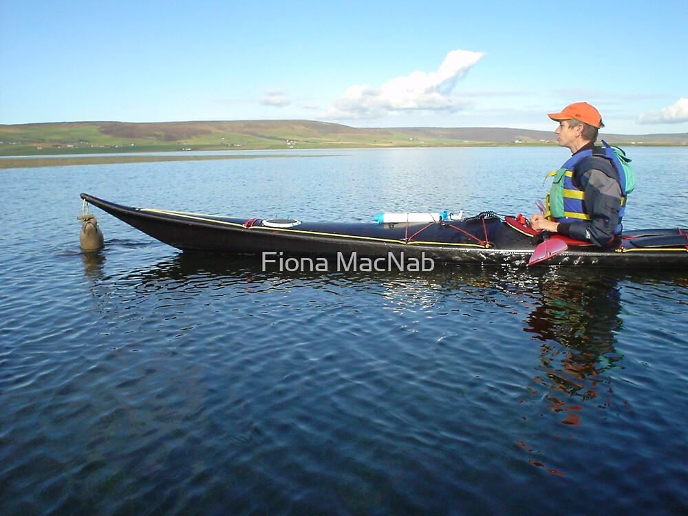 Seal encounter by Fiona MacNab