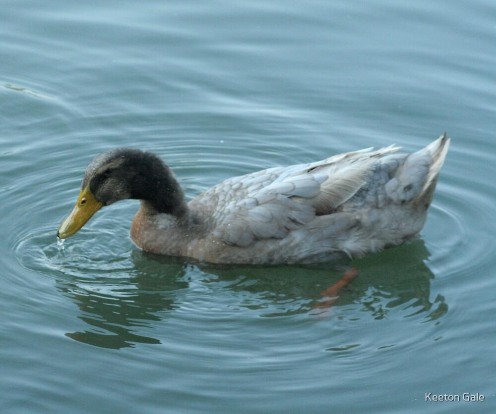Farm duck by Keeton Gale