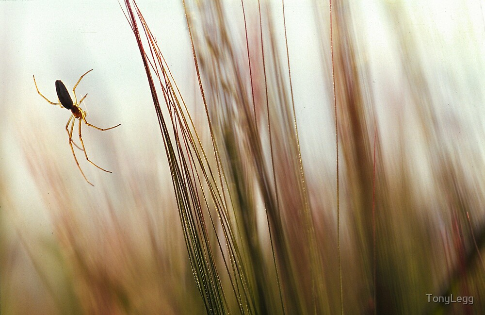 Harvest  by TonyLegg