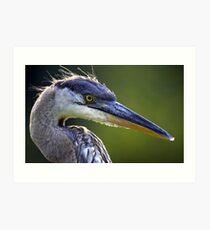 Great Blue Heron Head Shot Art Print