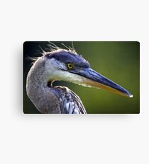 Great Blue Heron Head Shot Canvas Print