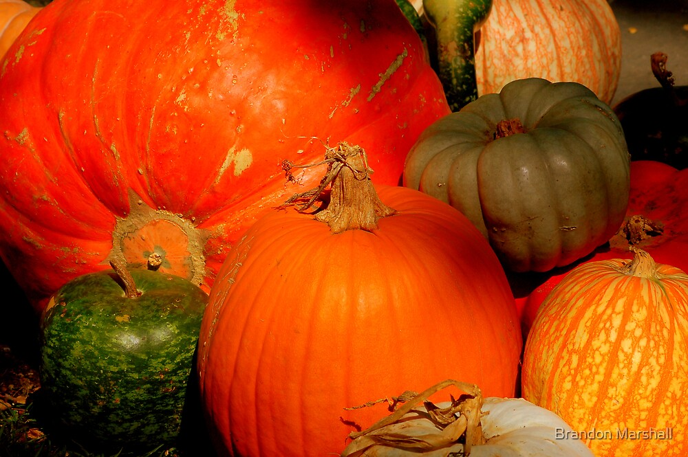 Pumpkins by Brandon Marshall