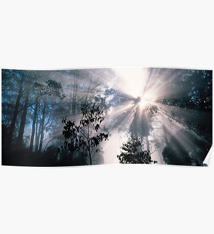 Forest Sunrays Poster