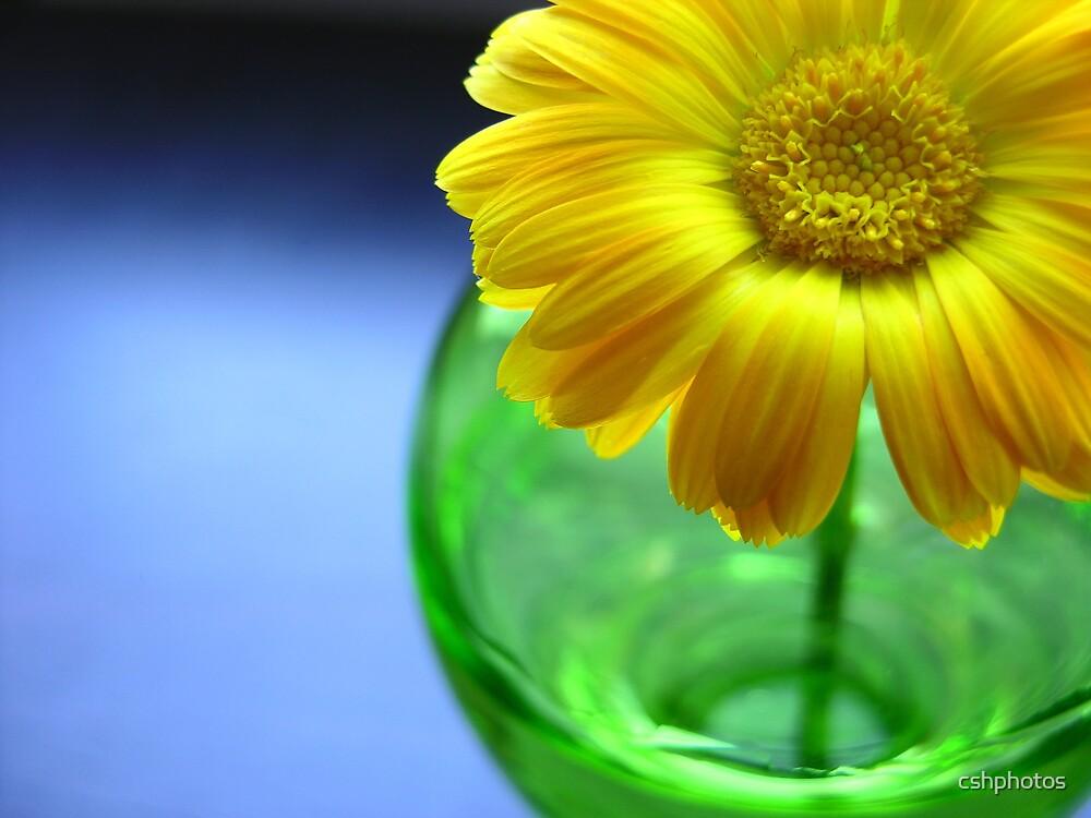 Flower in Vase by cshphotos