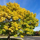 Autumn in Ballan by fabreplus