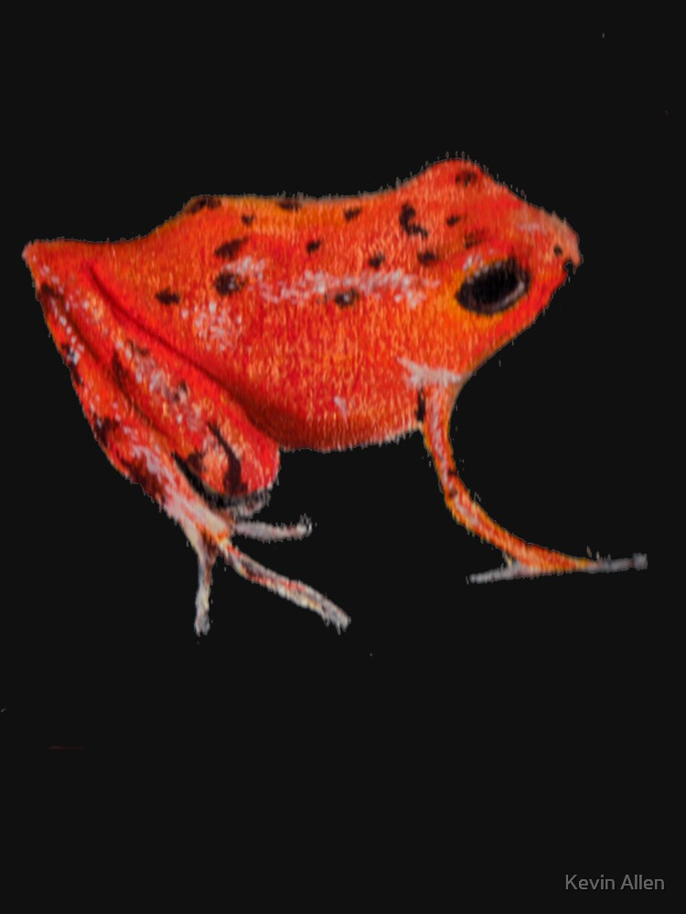 Exotic Frog by KevinAllen