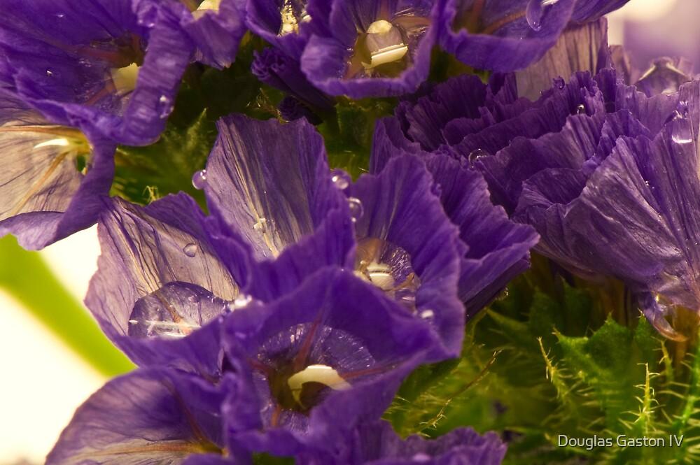 Wet Flowers by Douglas Gaston IV