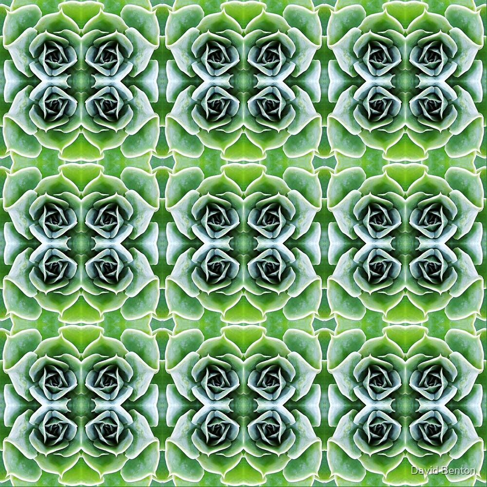 Cactus heart by David Benton
