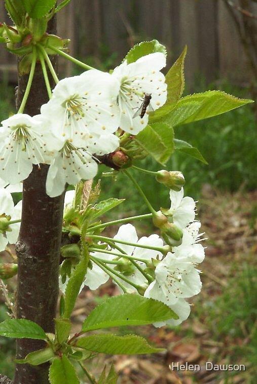 Spring Bee by Helen  Dawson