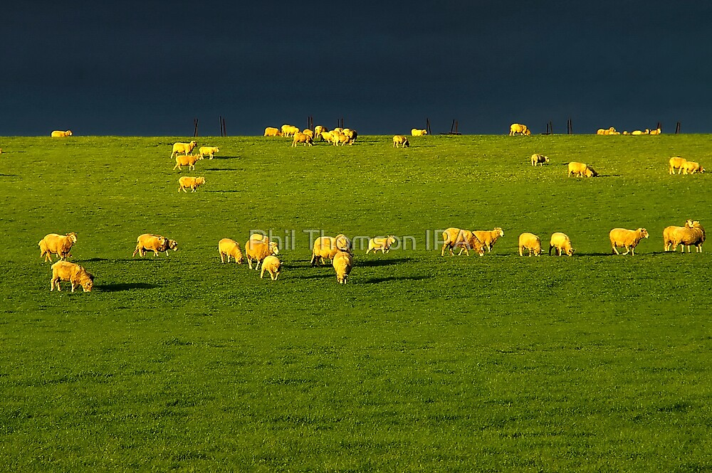 """Golden Fleece"" by Phil Thomson IPA"