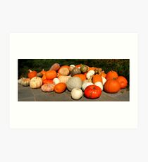 Panorama of Pumpkins & Gourds Art Print