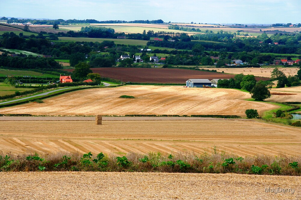 Harvest Stubble by MayDerry