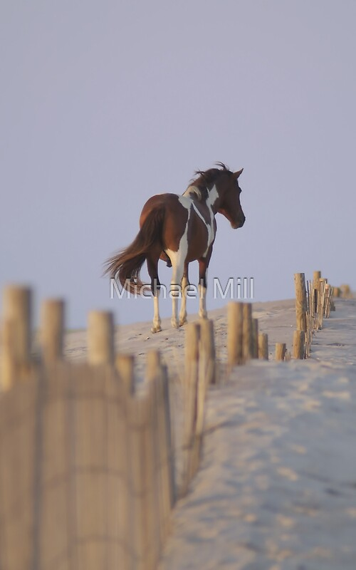 Quot Wild Pony Of Assateague Island Quot By Michael Mill Redbubble
