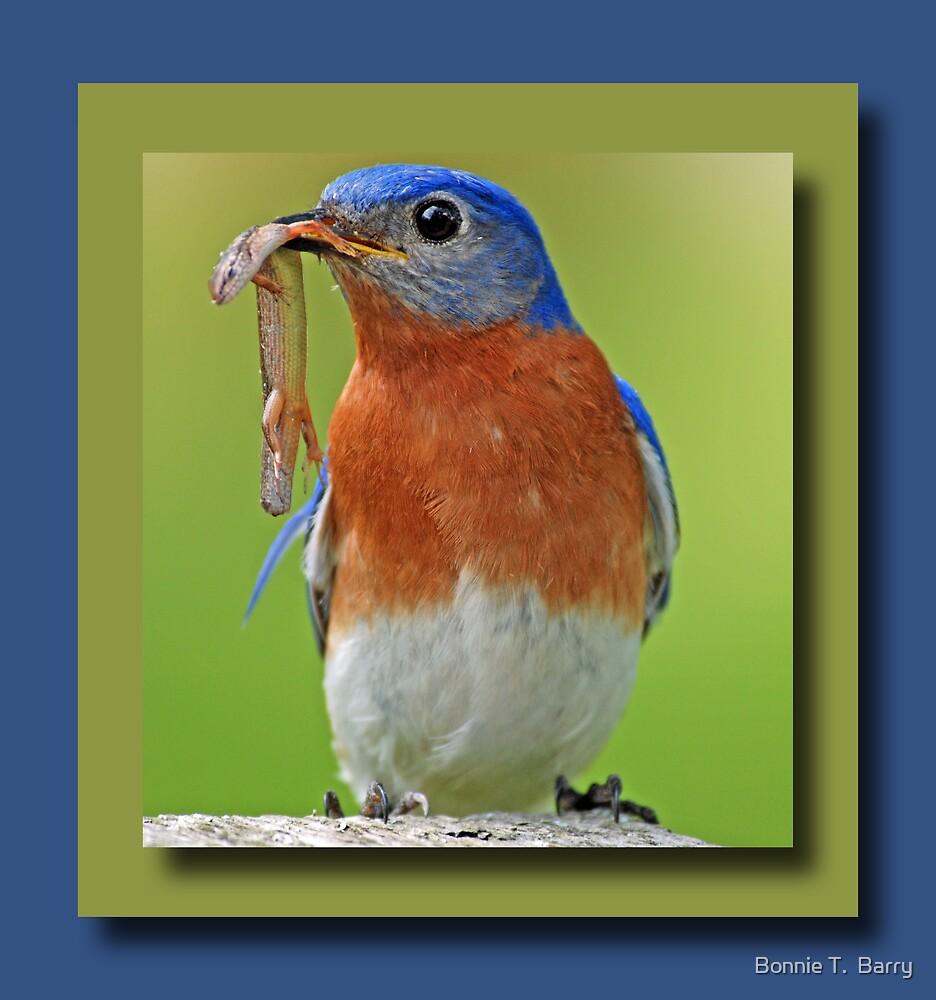 Bluebird Greeting Card by Bonnie T.  Barry