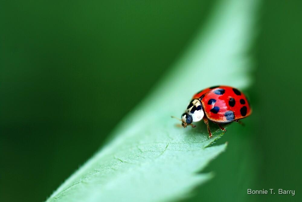 Ladybug Lane by Bonnie T.  Barry