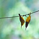 Lazy hazy Sunday afternoon by Margaret Stanton