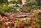 Rose Garden Sunset by Jessica Jenney