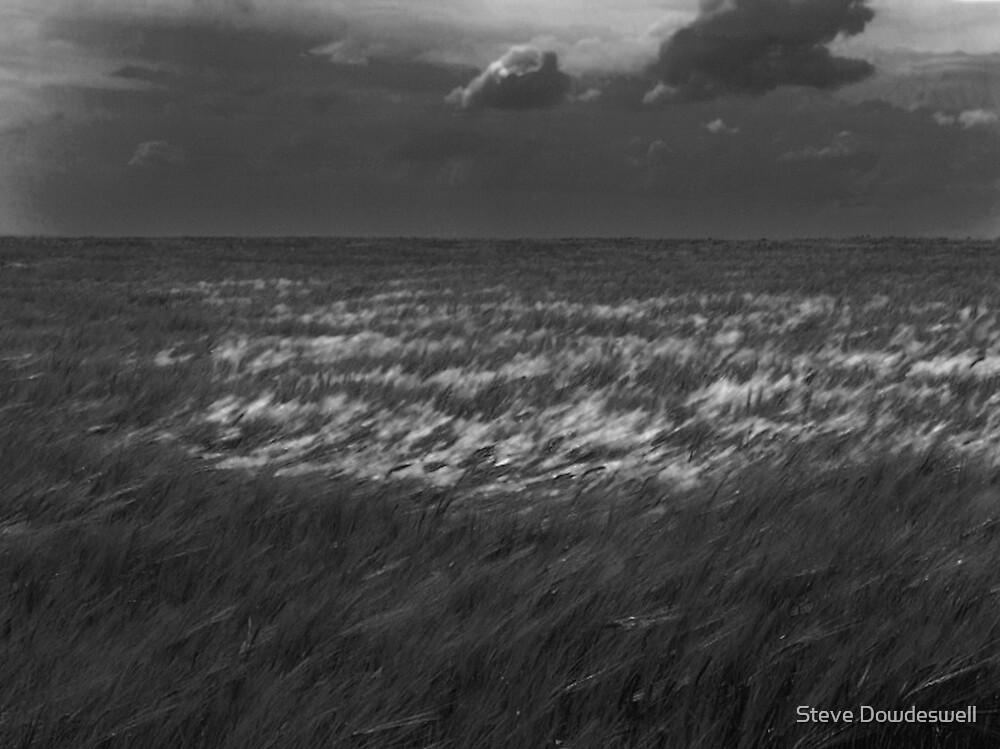 Wheat Field by Steve Dowdeswell