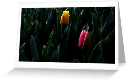 Tulips by Ben de Putron