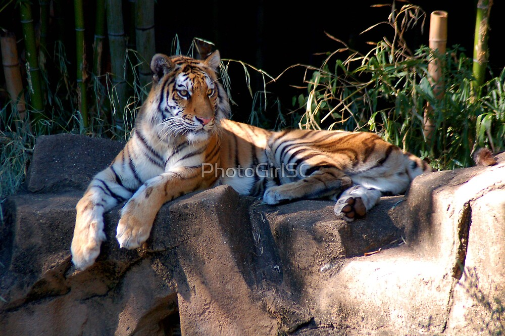 Tiger by Bjana Hoey