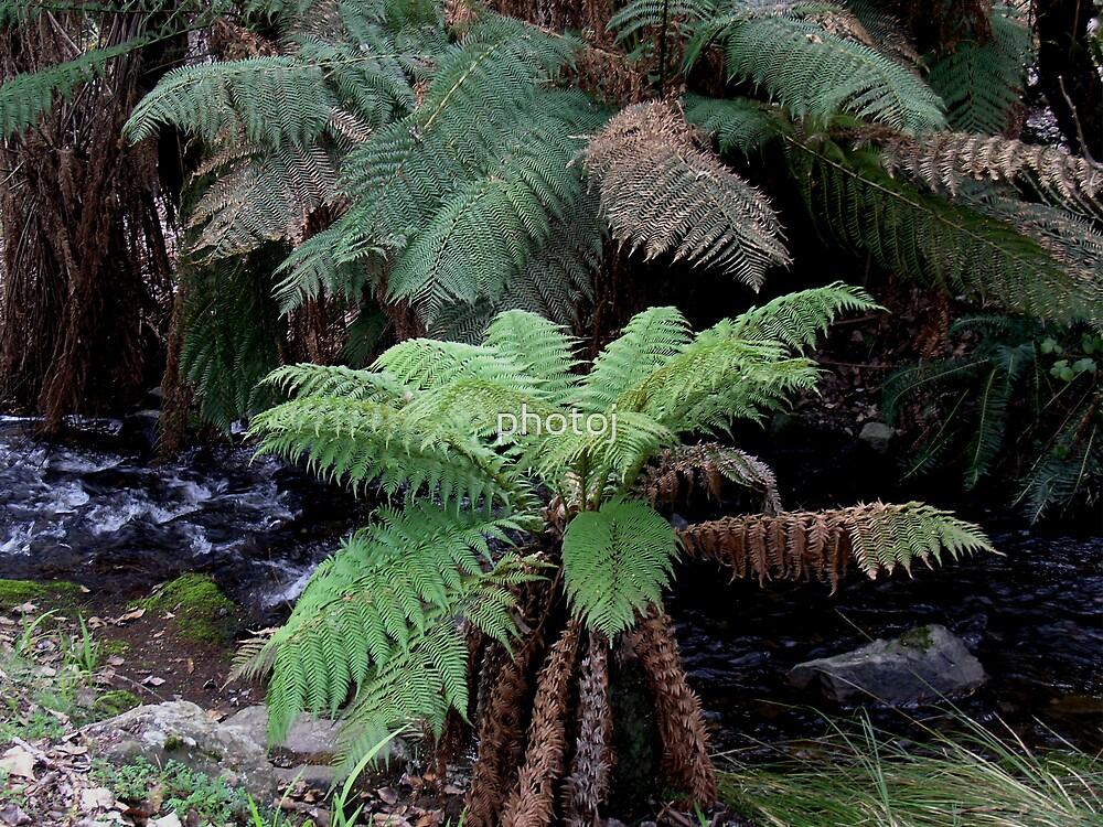 Tasmania, Lilly Falls National Park by photoj