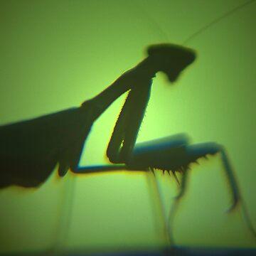 Praying Mantis  by EnvisageArt