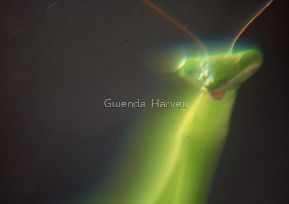 Praying Mantis 3 by Gwenda  Harvey
