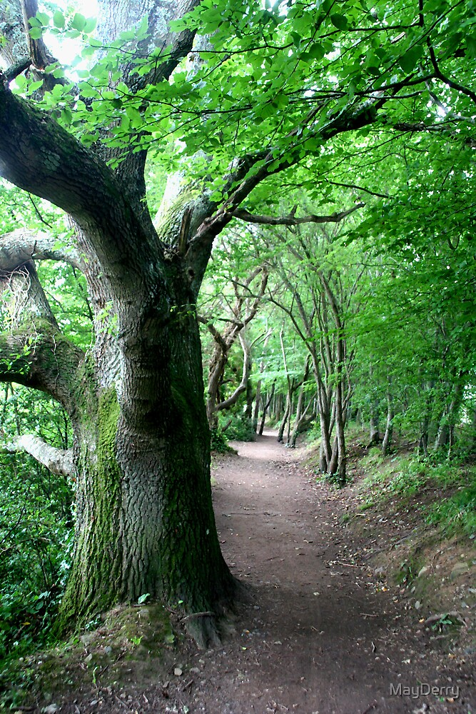 Woodland Path by MayDerry