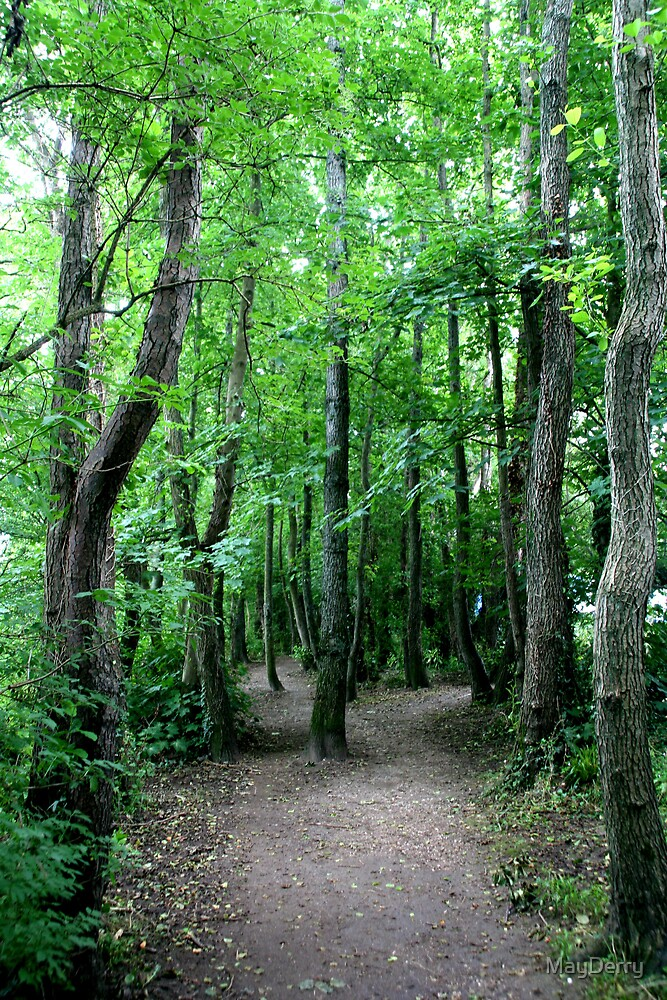 Woodland Walk by MayDerry