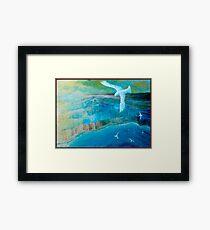 Seagulls. Framed Print