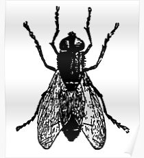 THE FLY, FLY, House Fly, Insect, Bug Poster