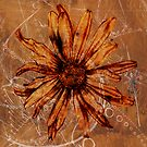 flower3 (life flower series) by lira