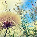 Dandelion Sky by Yvie Johnson