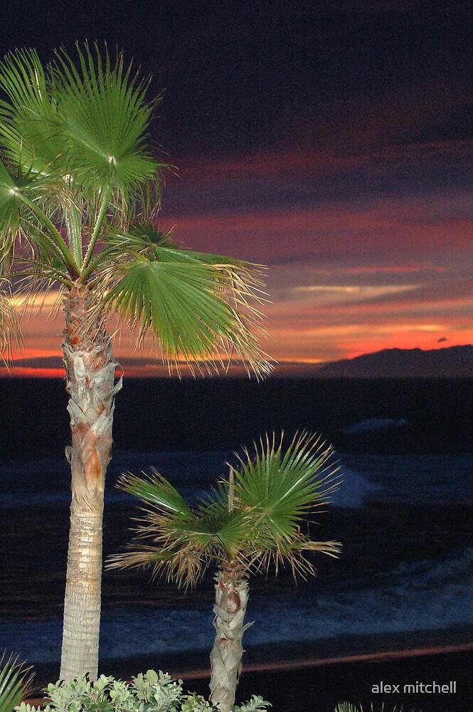 Night  Palms by alex mitchell