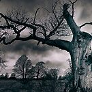 Ancient Tree In Windsor by martin bullimore