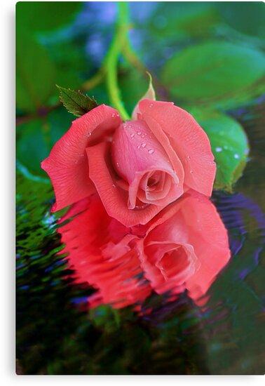 Rose in Reflection by BethBernier