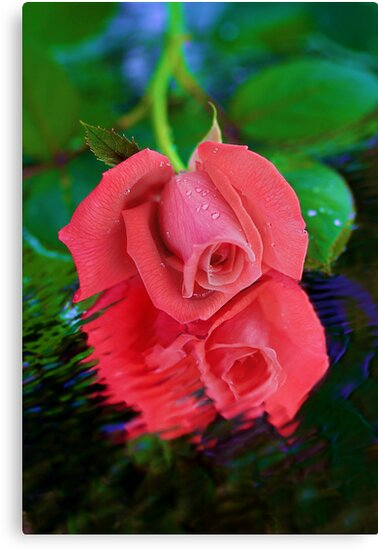 Rose in Reflection by BethBernier